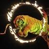 Цирки в Курске