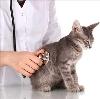 Ветеринарные клиники в Курске
